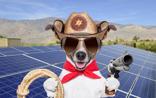 a texan dog with solar panels