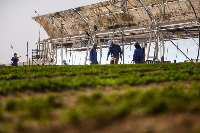 Producing food from the desert with solar energy