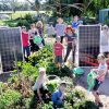 Renewable Newstead - solar energy