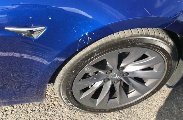 Model S vs. bird